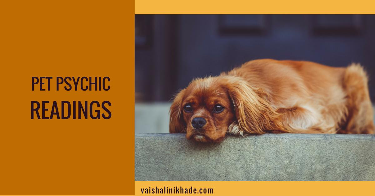 pet-psychic-readings